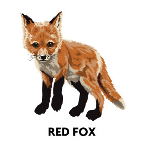 Red-Fox-Profile-Pic