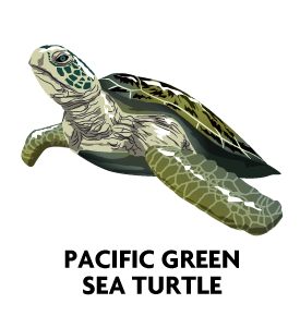 Sea-Turtle-Profile-Pic