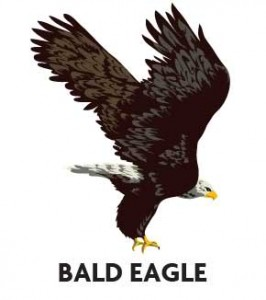 animal-profile-bald-eagle
