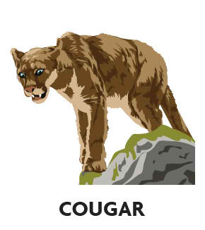 animal-profile-cougar
