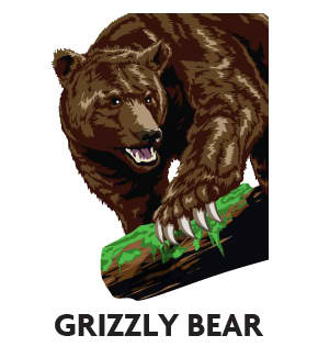 animal-profile-grizzly-bear