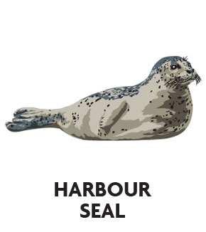 animal-profile-harbour-seal