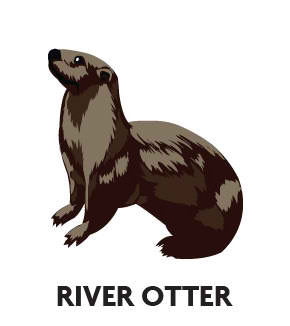 animal-profile-river-otter