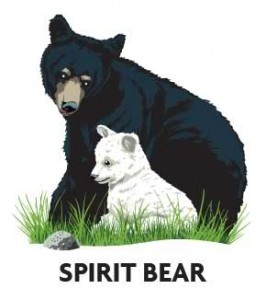 animal-profile-spirit-bear